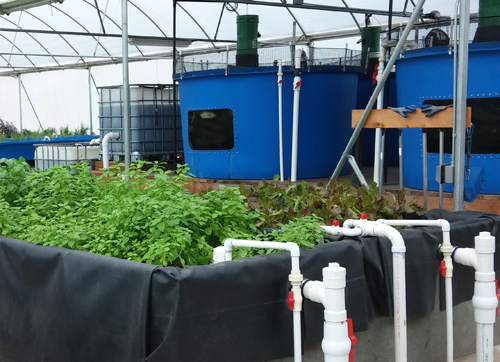 Lucky Clays Farm - Aquaponics Facility