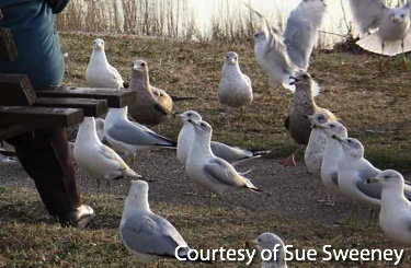 Gulls gathered at a park bench