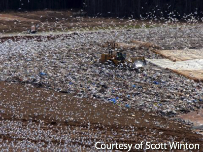 Gulls on a Landfill