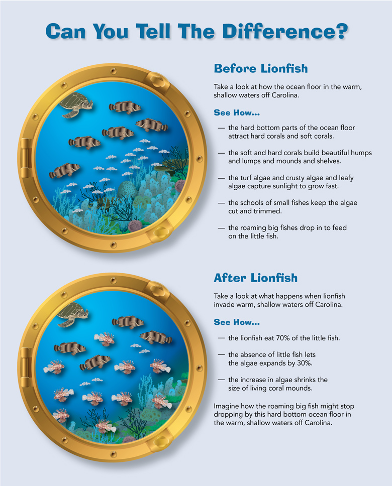 Infographic: Living with Lionfish
