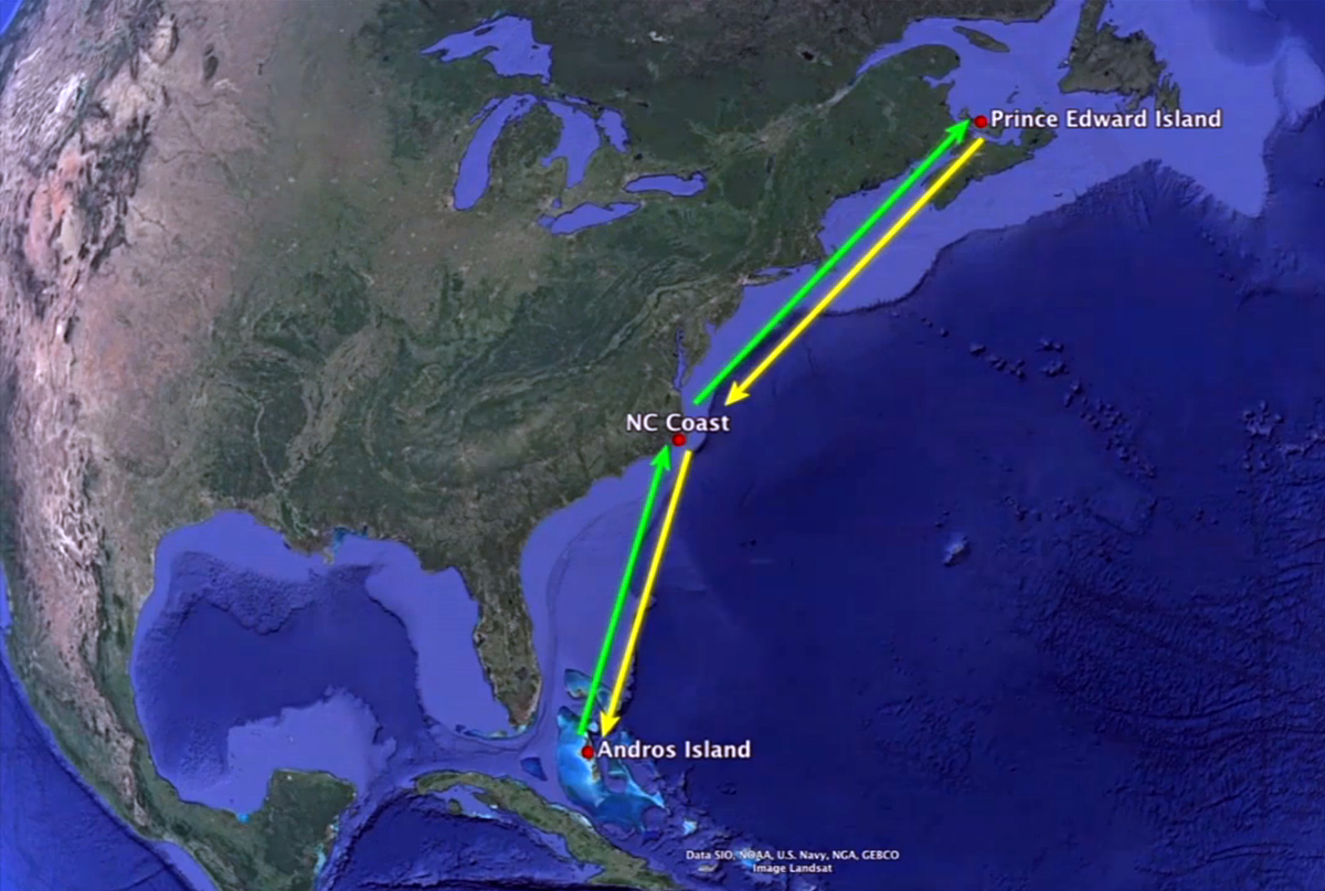 Piping Plover Migration