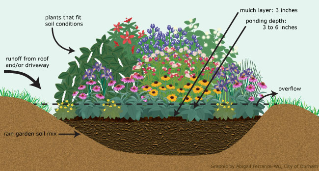 How To Build A Rain Garden Unc Tv Science